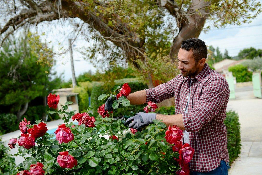 a gardener working