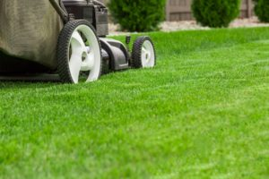 Lush green lawn being trimmed with a lawnmower
