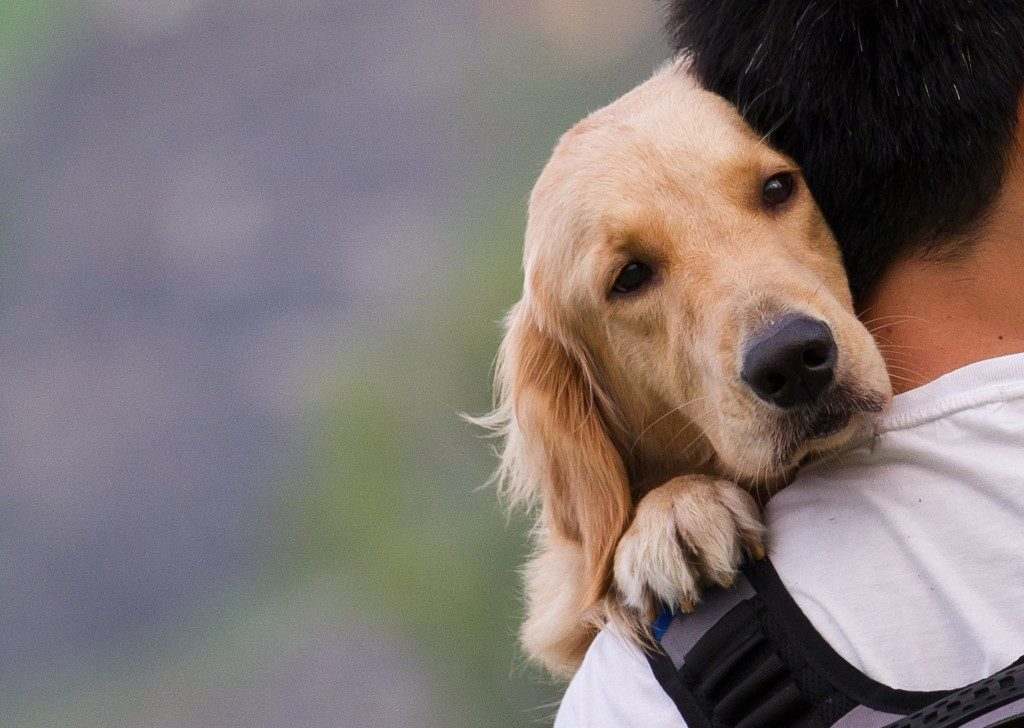 carrying a dog
