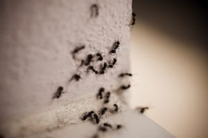 Ants on the wall
